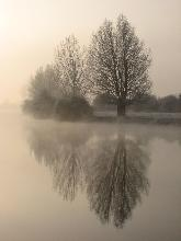 trees reflected in river thames, isis england photo by sarah laurence