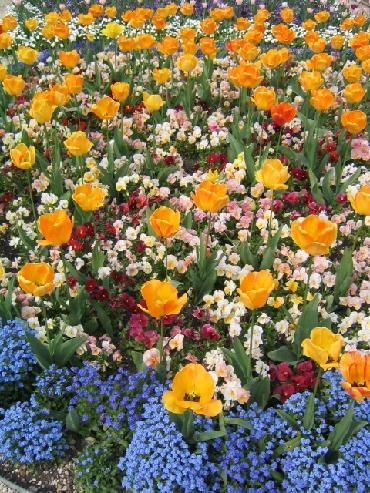 regents park tulips and flower beds photo by Sarah Laurence