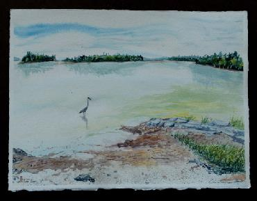 great blue heron on simpson point watercolor by Sarah Laurence
