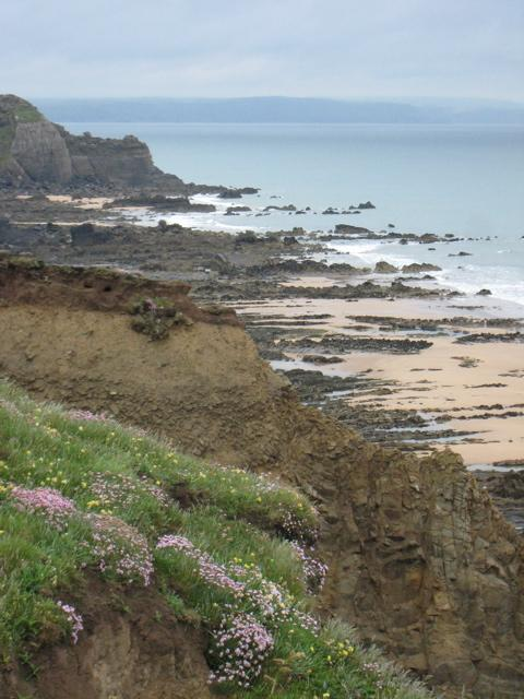 Devon cliffs and beach by Sarah Laurence