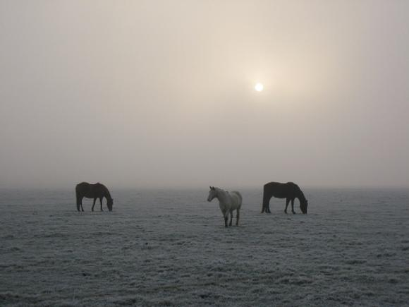 port meadow horse photo by Sarah Laurence