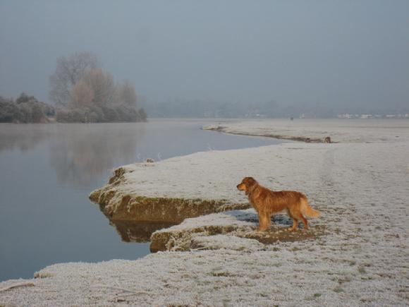 port meadow frost photo by Sarah Laurence
