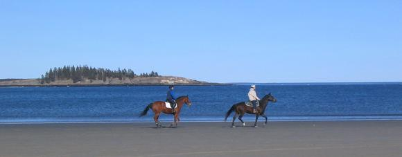 horses on Popham Beach